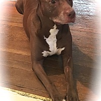 Adopt A Pet :: KENO~~Courtesy Listing URGENT - Sharonville, OH