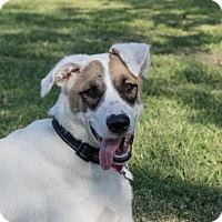 Adopt A Pet :: TEXAS, HOUSTON; 'BANDIT' **STOLEN** - Little, Rock, AR