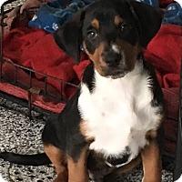 Adopt A Pet :: Dallas - Washington, PA