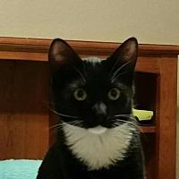 Adopt A Pet :: Jordan - Chino, CA