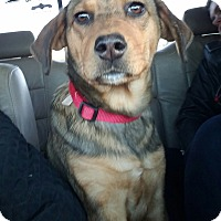 Adopt A Pet :: Holly - Charlestown, RI