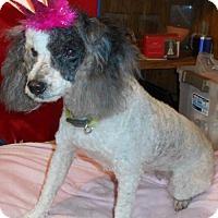 Adopt A Pet :: Regina - Yucaipa, CA