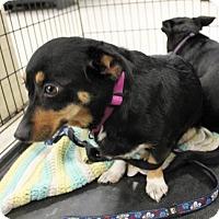 Adopt A Pet :: Fawna *Pending* - Logan, UT