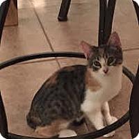 Adopt A Pet :: Megan - Chandler, AZ