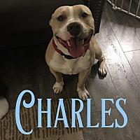 Adopt A Pet :: Charles - Cheney, KS