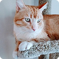 Adopt A Pet :: Morris - Las Vegas, NV