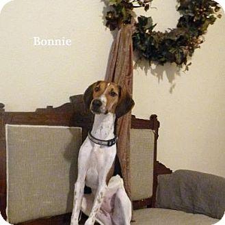 Greyhound/Beagle Mix Dog for adoption in Hamburg, Pennsylvania - Bonnie