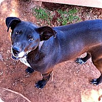 Adopt A Pet :: Addie - Spartanburg, SC