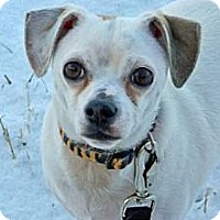 Adopt A Pet :: Nosey - Cheyenne, WY