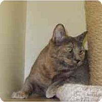 Adopt A Pet :: Valerie - Milwaukee, WI
