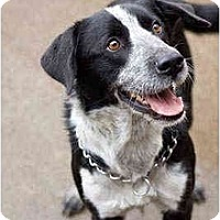 Adopt A Pet :: Tony - Portland, OR