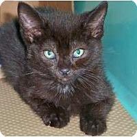 Adopt A Pet :: Koko - Secaucus, NJ