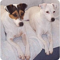 Adopt A Pet :: MAX & MOLLY - Phoenix, AZ
