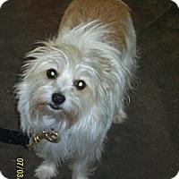 Adopt A Pet :: Mandi-Prison Obedience Trained - Hazard, KY