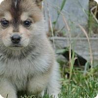 Adopt A Pet :: Bobby - Saskatoon, SK