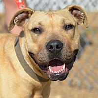 Mastiff Mix Dog for adoption in Jackson, Mississippi - Eden