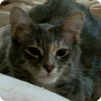 Adopt A Pet :: Anny - london, ON