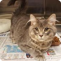 Adopt A Pet :: Adrian & Daquiri -Purfect Pair - Arlington, VA