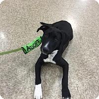 Adopt A Pet :: Bruno - Sinking Spring, PA