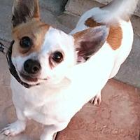 Adopt A Pet :: Eli - Phoenix, AZ