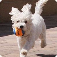 Adopt A Pet :: Chimi - Torrance, CA