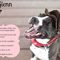 American Staffordshire Terrier Mix Dog for adoption in Bandera, Texas - Glenn