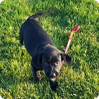 Adopt A Pet :: Crunch - Evergreen, CO