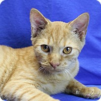Adopt A Pet :: O.G. (Orange George) - Winston-Salem, NC