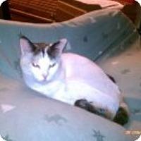 Adopt A Pet :: Cochise - Tombstone, AZ