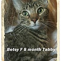 Adopt A Pet :: Betsy - Brandon, FL