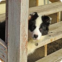 Adopt A Pet :: MARLEY *adoption pending!* - Nampa, ID