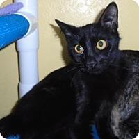 Adopt A Pet :: Bunny - Westminster, CO