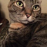 Adopt A Pet :: Nora - Columbus, OH