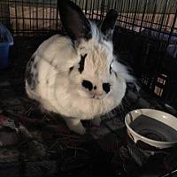Adopt A Pet :: Buffalo - Stella - Erie, PA