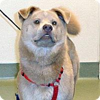 Adopt A Pet :: Chuy - Wildomar, CA