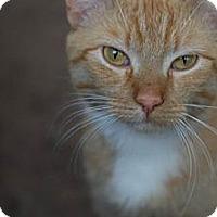 Adopt A Pet :: Brian - Chicago, IL
