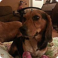 Adopt A Pet :: Molly - Hannah - Indianapolis, IN