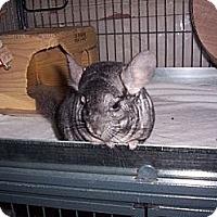 Adopt A Pet :: Maggie - Avondale, LA