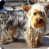 Adopt A Pet :: Bailey - Tallahassee, FL