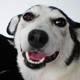 Husky Mix Dog for adoption in Crandall, Georgia - Rosie