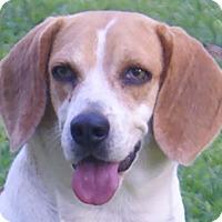 Adopt A Pet :: Wishbone - Allentown, PA