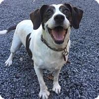Adopt A Pet :: Princess - Grafton, MA