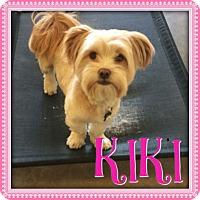 Adopt A Pet :: Kiki - Encino, CA