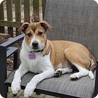 Adopt A Pet :: ButterPecan - Mt. Prospect, IL