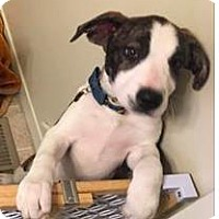 Adopt A Pet :: Rose Radish - Mission, KS