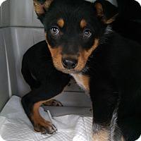 Adopt A Pet :: Philippe - Ogden, UT