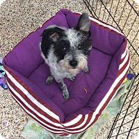 Adopt A Pet :: Sara - Thousand Oaks, CA