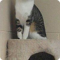 Adopt A Pet :: Winsir - South Haven, MI