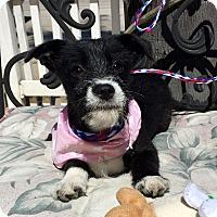 Adopt A Pet :: Amber (BH) - Santa Ana, CA