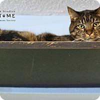 Adopt A Pet :: Chipmunk - Edwardsville, IL